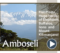 Amboseli National Park - F Kings Msafiri Safari Attraction